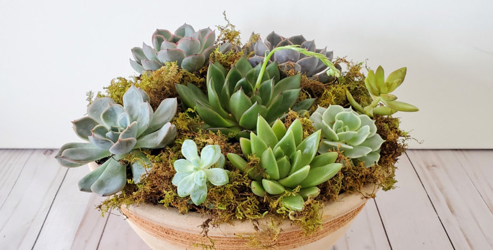 Succulent Garden in Pot
