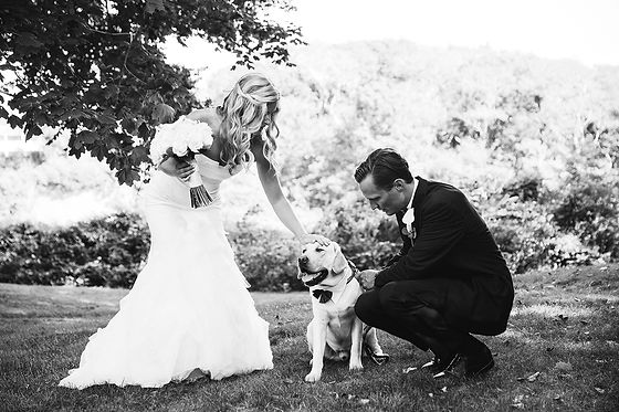 dog bride groom.jpg