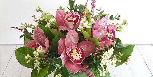 Cymbidium Orchids - Pink