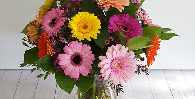 Multi-Colored Gerber Daisy
