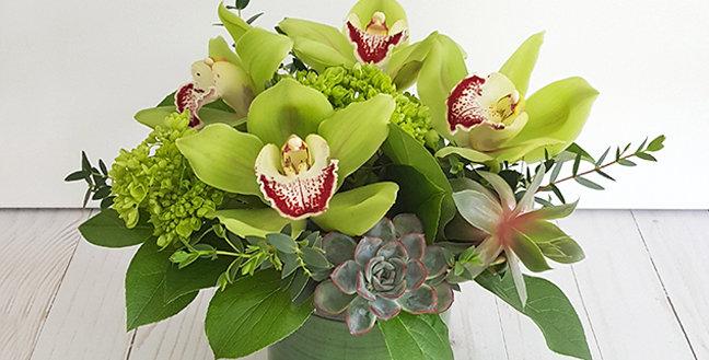 Cymbidium Orchids - Green