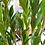 Thumbnail: ZZ Plant