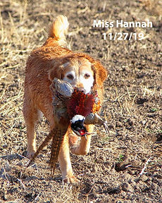 Miss Hannah in the field.jpg