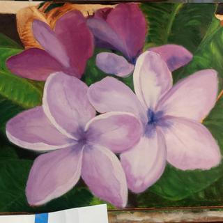 Lilac Frangapinis