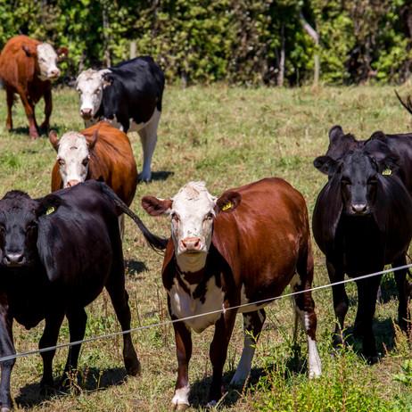 COMMERCIAL | FARMING