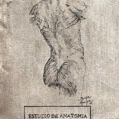 ESTUDIO DE ANATOMIA SEGUN EL TORSO I
