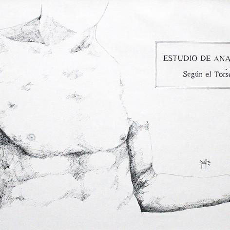ESTUDIO DE ANATOMIA SEGUN EL TORSO II