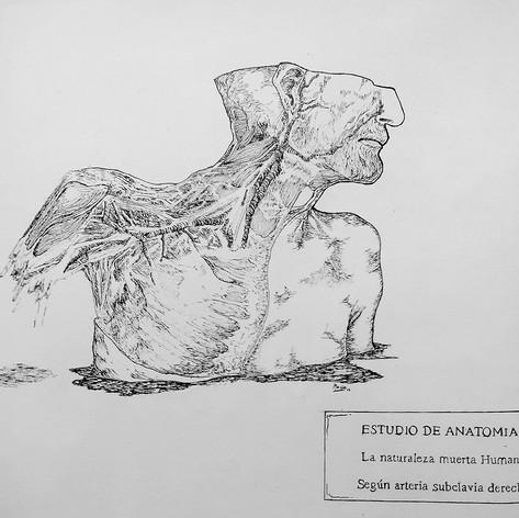 ESTUDIO DE ANATOMIA SEGUN ARTERIA SUBCLAVIA DERECHA