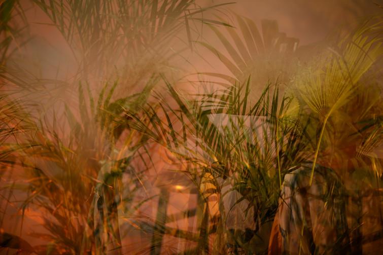 Palm trees multiple.jpg