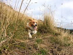 Dog walking Christchurch
