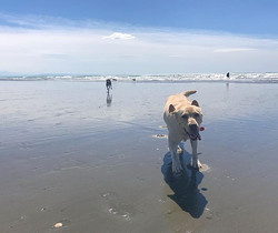 It was Amber's first day at the beach wi