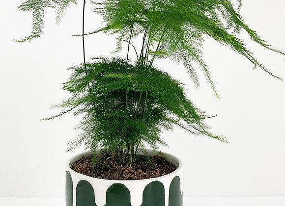 Plant Pot 03