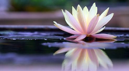 lotuscover-672x372.jpg
