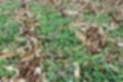 MixedCover_Detail.jpg