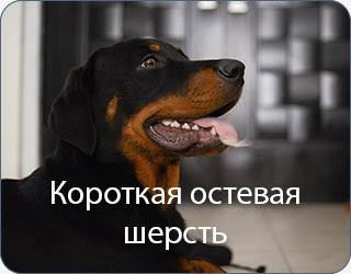 short-1.jpg