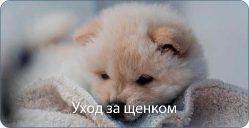 Косметика для ухода за шерстью щенка