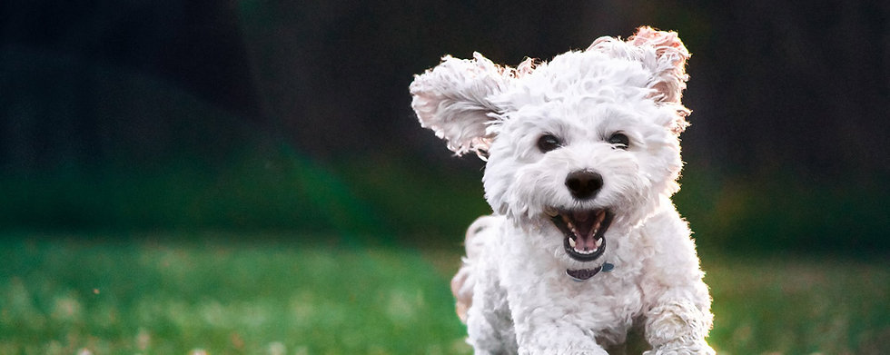 100showdog.ru - магазин профессиональной косметики для собак
