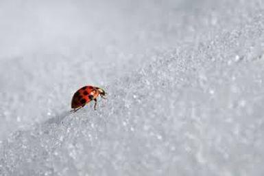 ladybug.jpeg