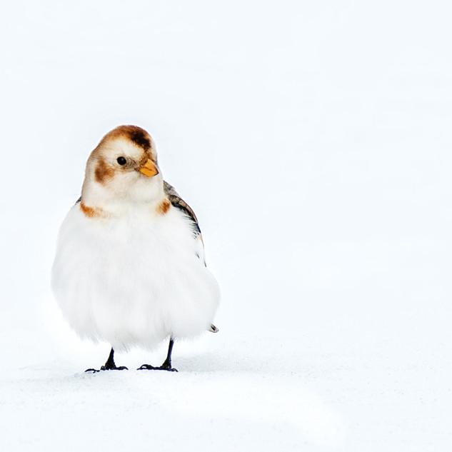Снеговичок.