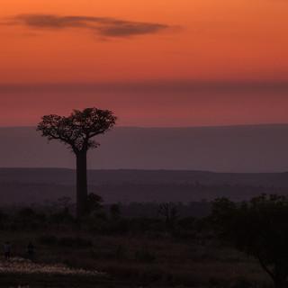 Мадагаскарские сумерки