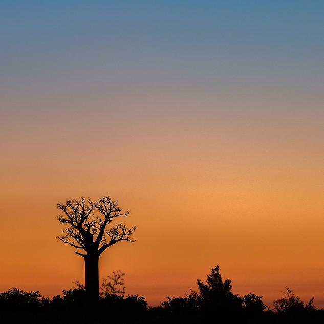 Мадагаскарское одиночество.