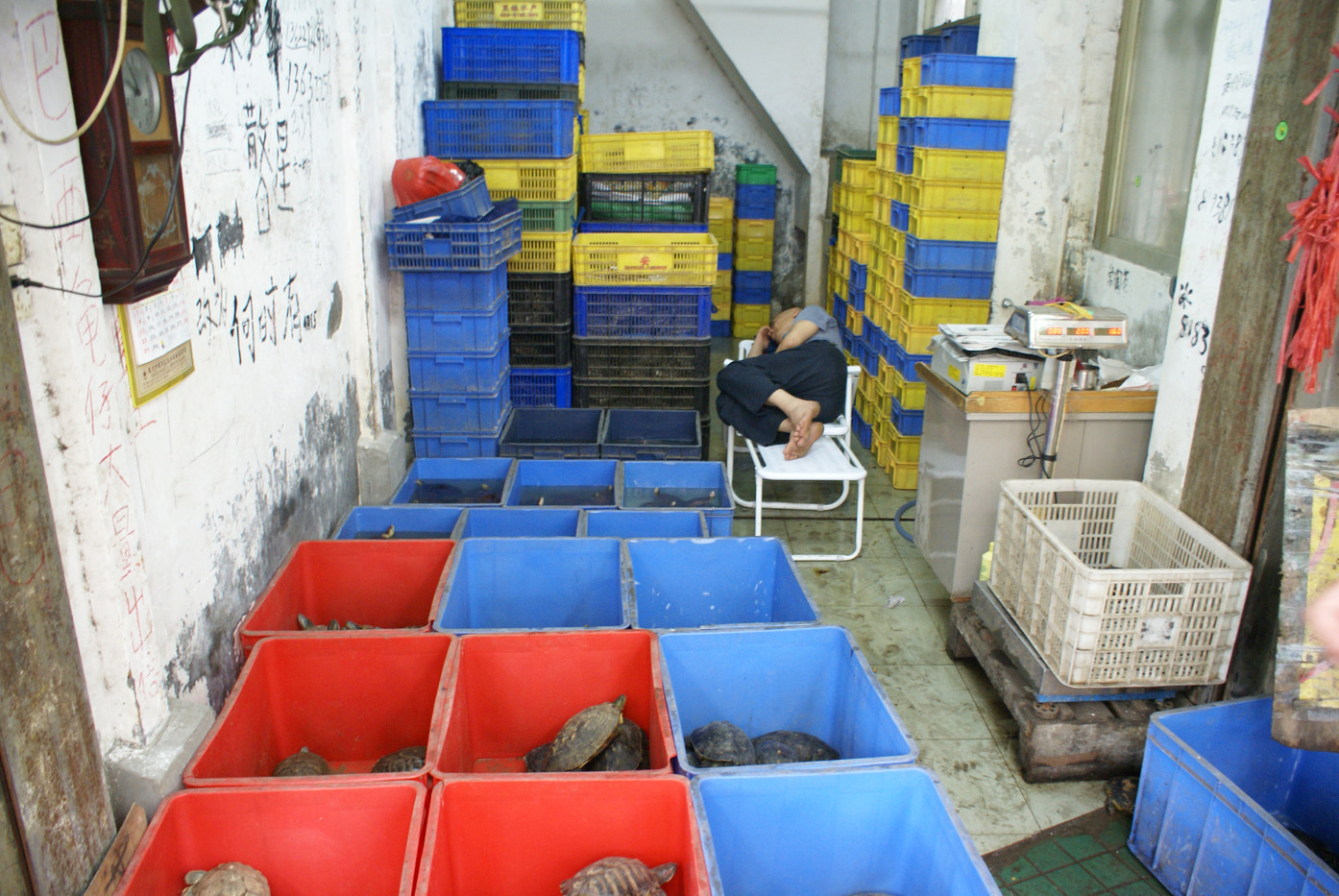 The Qingping Turtle (Food) Market