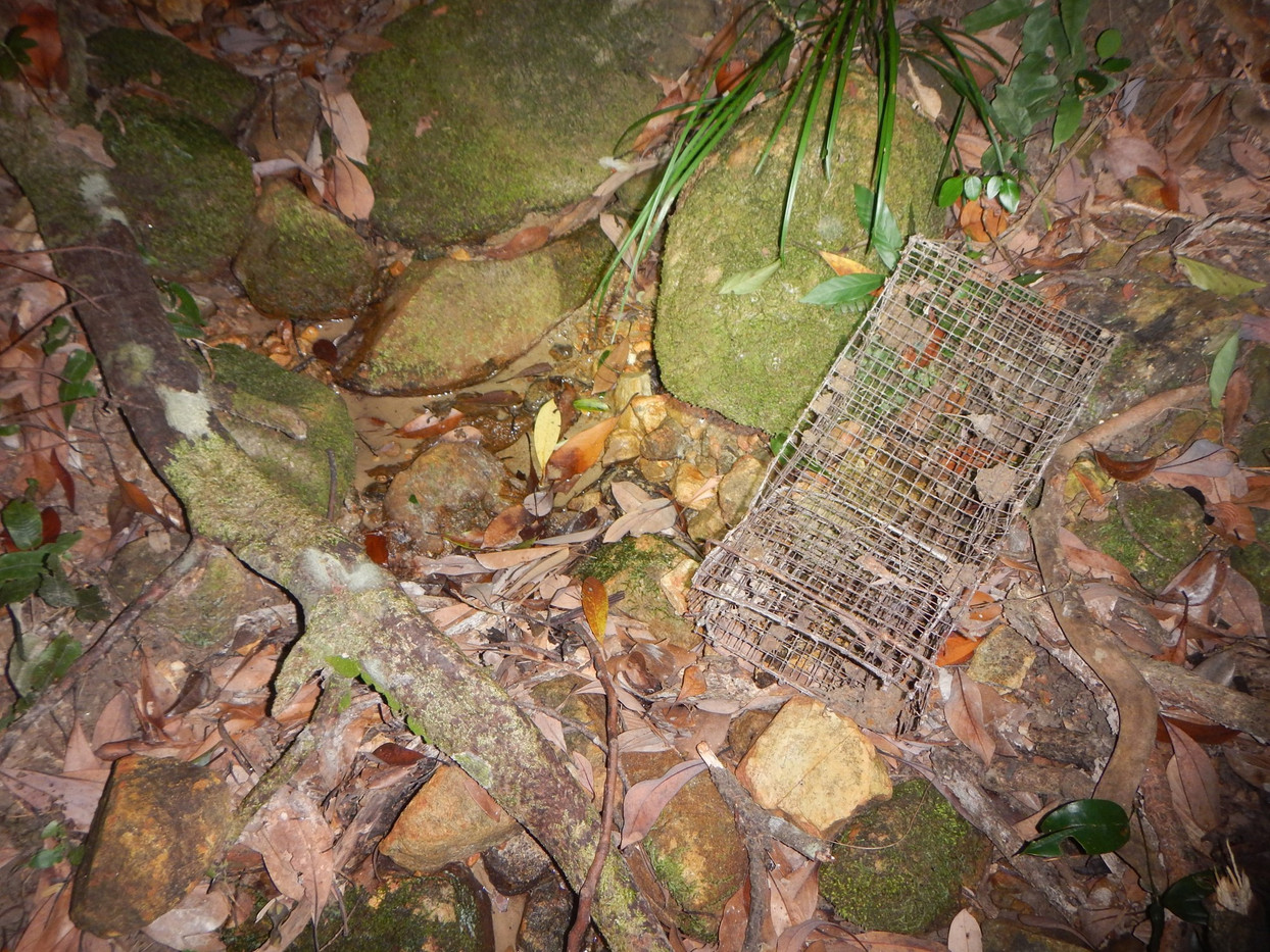 Turtle Trap in Habitat