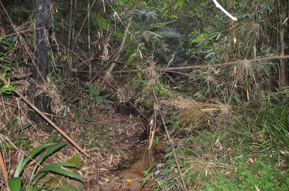 """Habitat of Cuora """"serrata"""" on Hainan"""