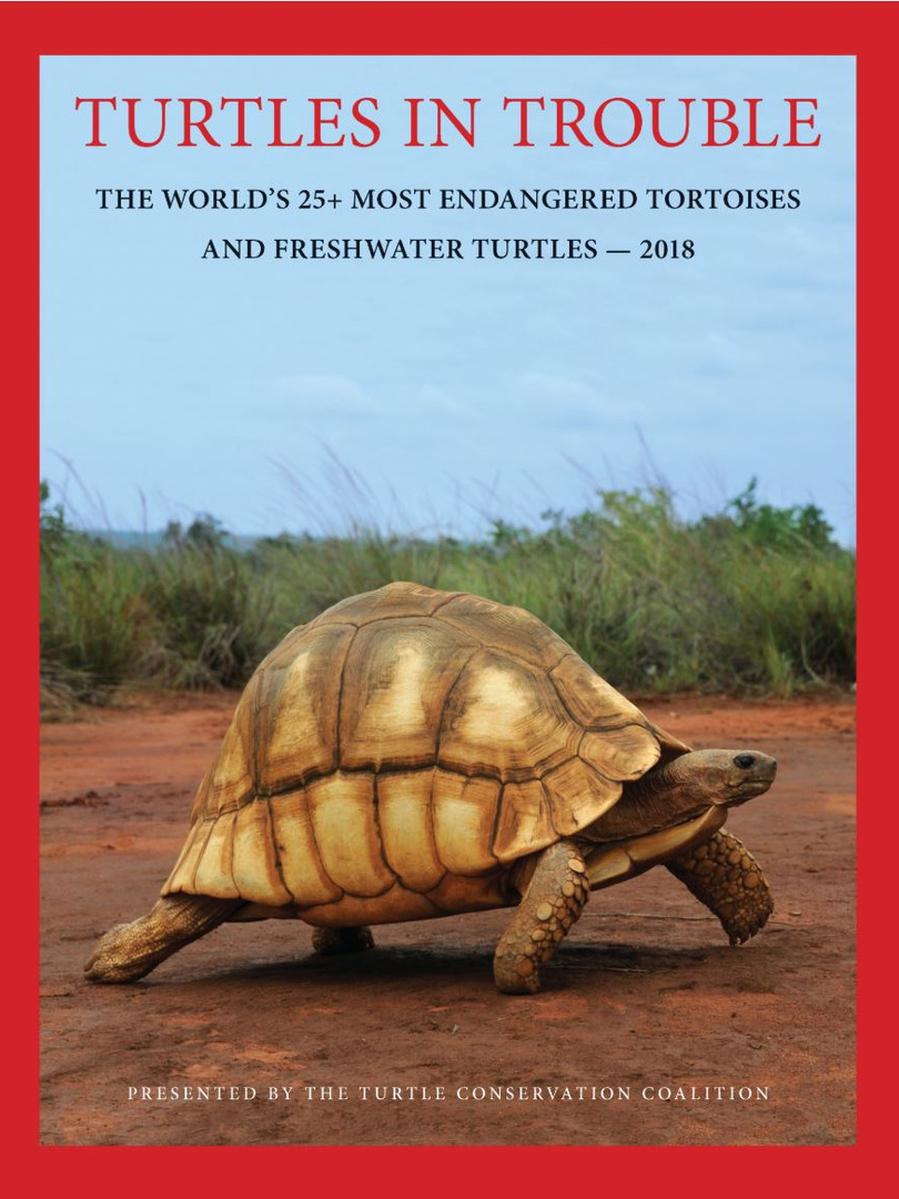 Turtles in Trouble 2018