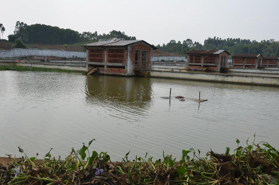 Turtle Farm on Hainan