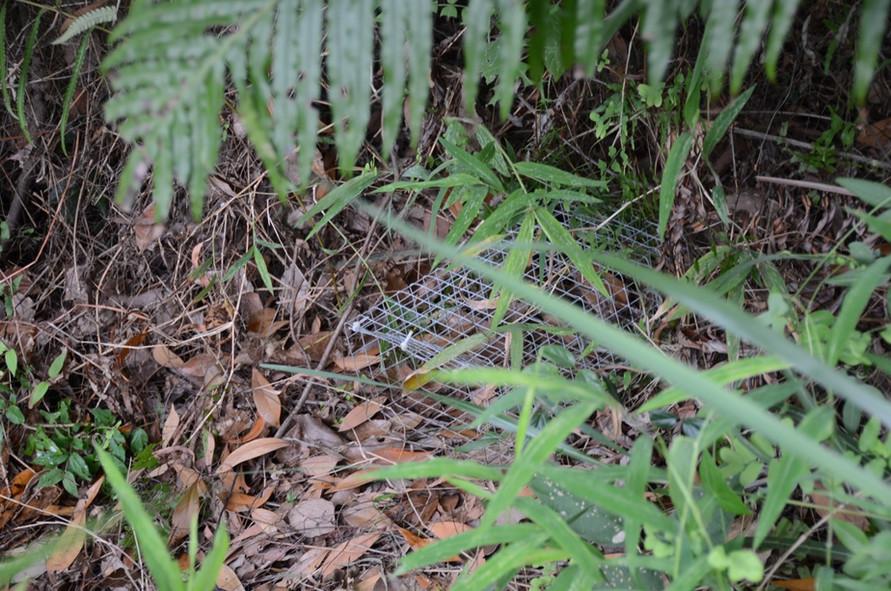Turtle Trap in Habitat