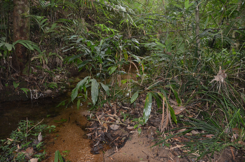 Habitat of Cuora galbinifrons