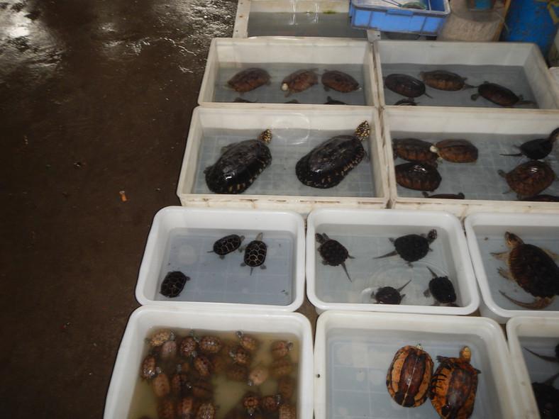 The Huadiwan Pet Turtle Market