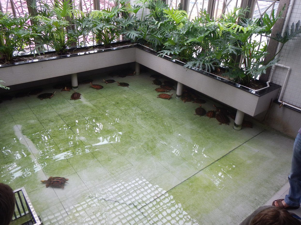 Turtle Farm in Guangdong
