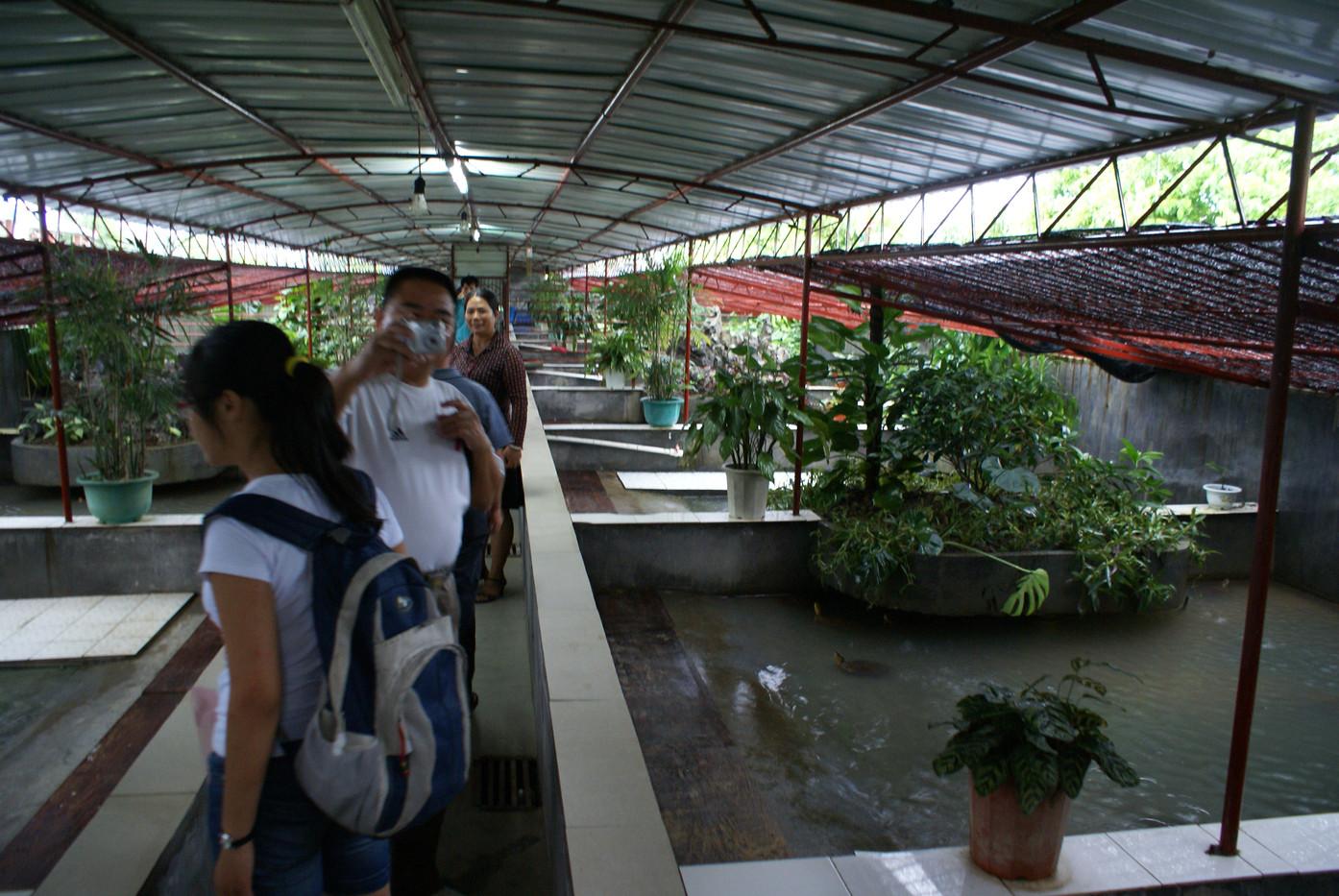 Turtle Farm in Guangxi