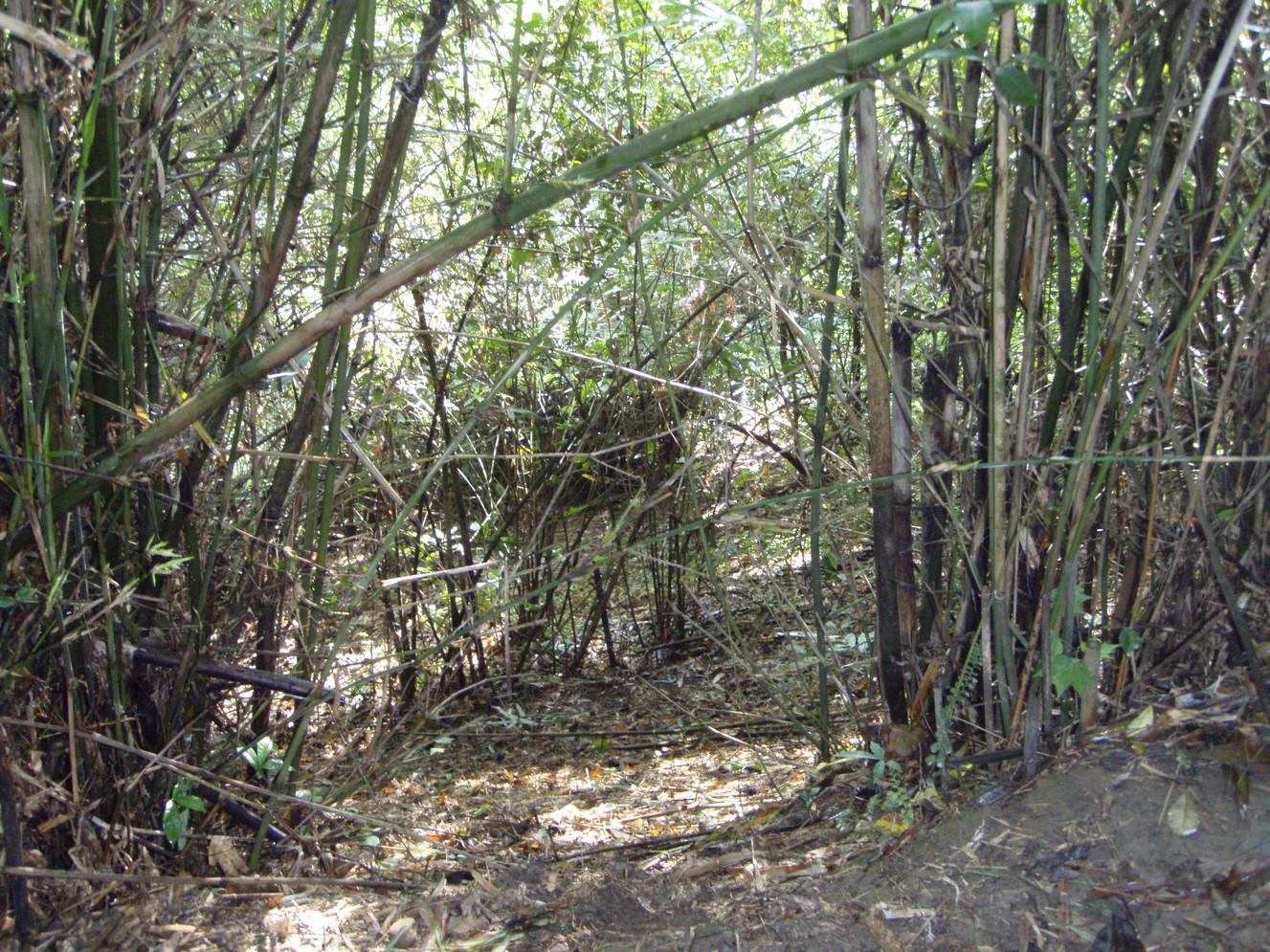 Habitat of Cuora mccordi