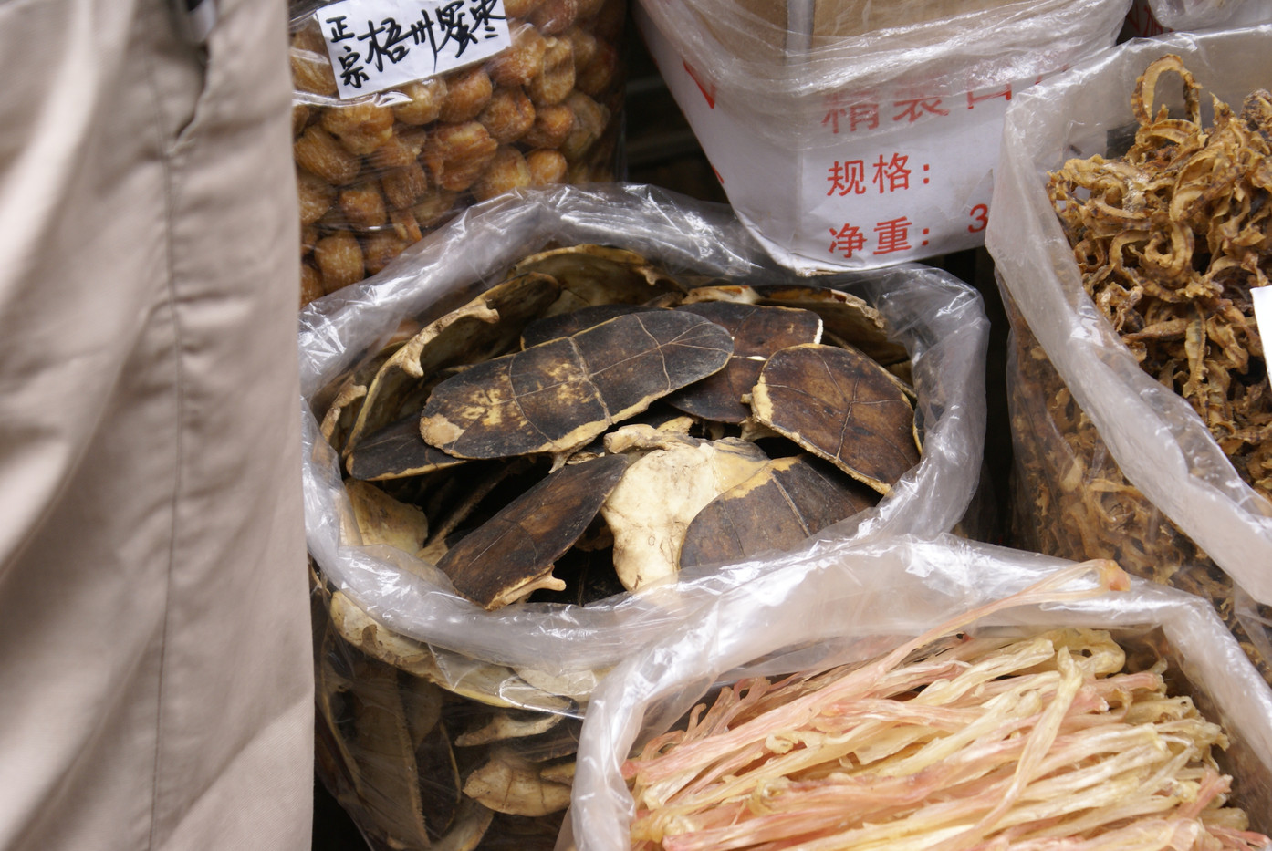 Dried Turtle Shell at the TCM Market in Guangzhou