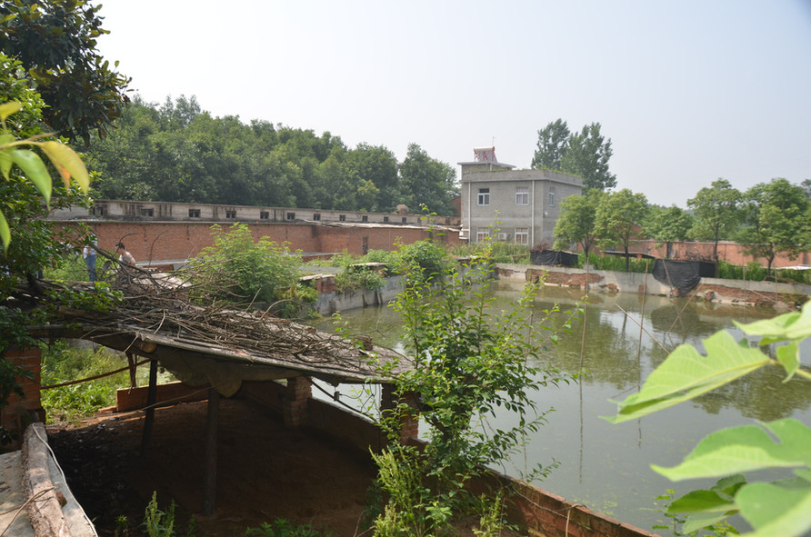 Turtle Farm in Henan