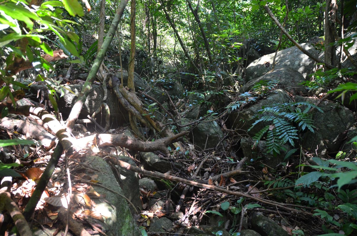 Habitat of Cuora mouhotii obsti