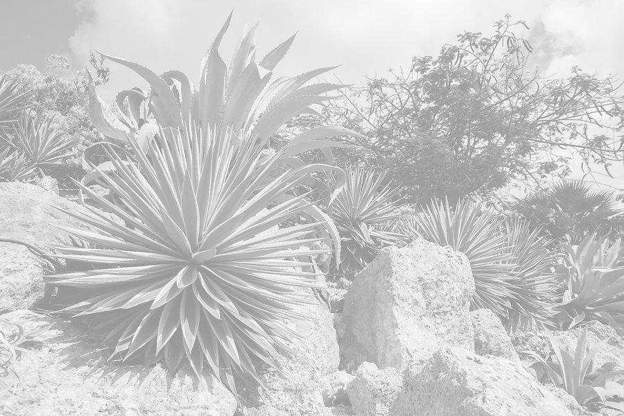 Desert%20Nature_edited.jpg