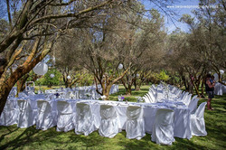 Reception in the Olive Grove