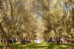 Olive Grove Afternoon Wedding