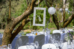 Olive Grove Decor