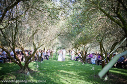 Beautiful Olive Grove Ceremony