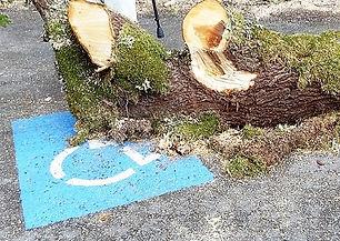tree in handicapped spot.jpg