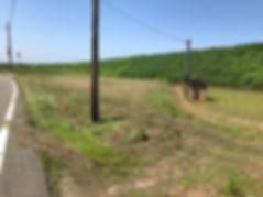 新潟 草刈り、新潟、草刈り、草刈り代行、greenfields、グリーンフィールズ、新潟県 草刈り代行
