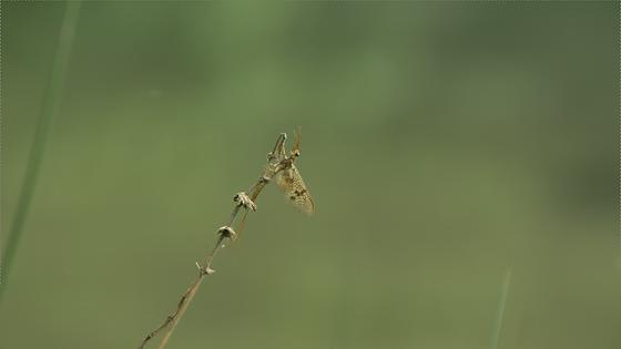 libellules.png