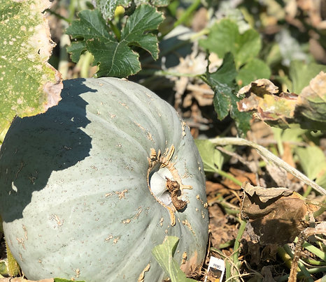 2020 Fall Farm Share Program