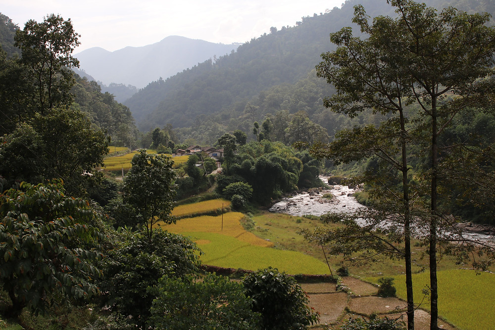 View on green rice fields and the flowing river behind Nayapul, Nepal (by Hungrigaufmeer)