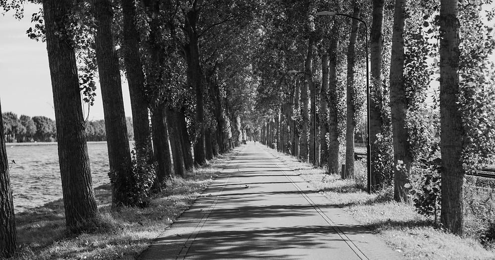 Baumallee am Amsterdam-Rijnkanaal auf dem Weg nach Utrecht (by HungrigaufMeer)
